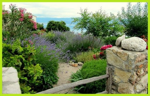 Plantas de Exterior www.abonosfertilizantesyplantas.com