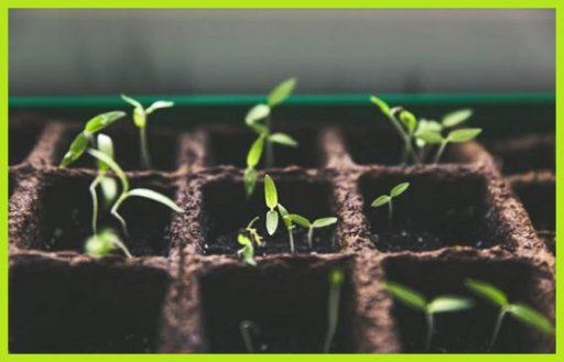 Armarios de cultivo kit basico profesional led sodio completo www.abonosfertilizantesyplantas.com