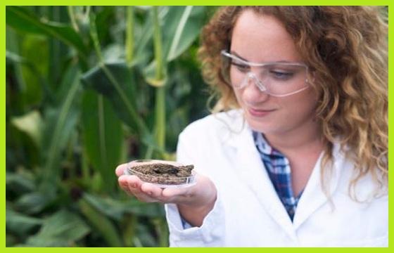Fertilizante Mineral