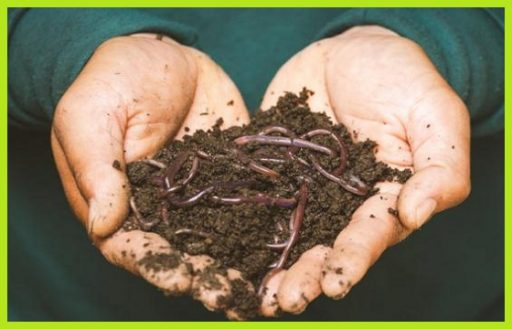 Humus de lombiz liquido o solido www.abonosfertilizantesyplantas.com