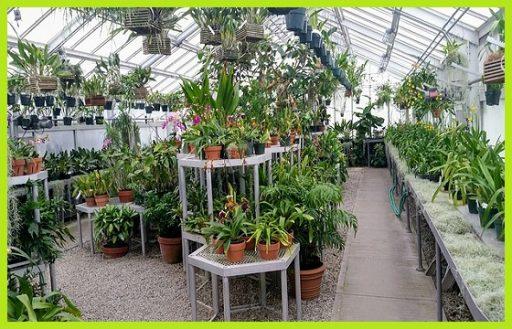 Plantas de interior decorativas www.abonosfertilizantesyplantas.com