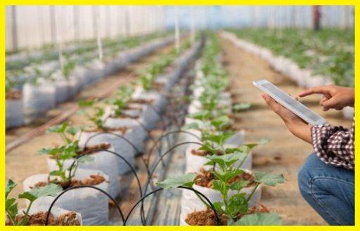 Control del clima temperatura y humedad cultivo de interior www.abonosfertilizantesyplantas.com