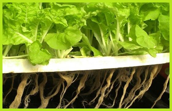 Cultivo aeropónico huerta aeropónica fertilizantes aeroponía www.abonosfertilizantesyplantas.com