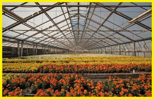 Cultivo de interior kits armarios de cultivo www.abonosfertilizantesyplantas.com