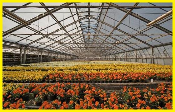 Cultivo de Interior
