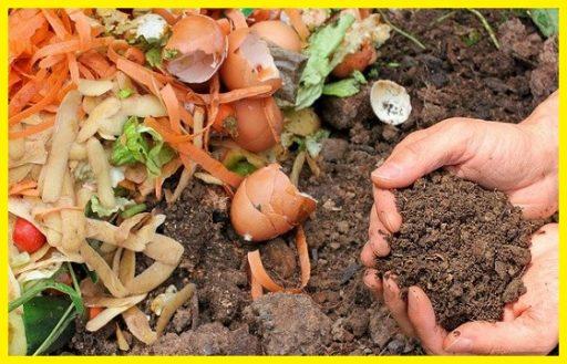 Fertilizantes y Abonos www.abonosfertilizantesyplantas.com