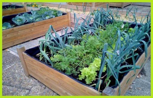 Huerto urbano kits mesas de cultivo semillas verduras hortalizas huerta doméstica www.abonosfertilizantesyplantas.com