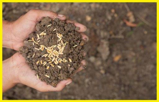 Semillas y Plantas www.abonosfertilizantesyplantas.com