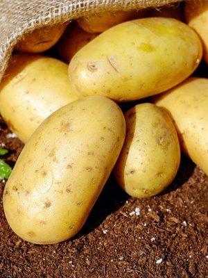 Siembra y cosecha de patatas ecológicas paso a paso